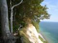 Bäume am Klippenrand