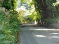 Straßenallee auf Alderney
