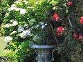 Garten auf Sark