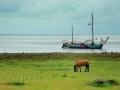 Pferd und Schiff Idyll am Wattenmeer