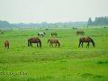 Pferdekoppel