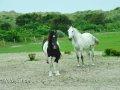 2 Pferde auf einer Koppel